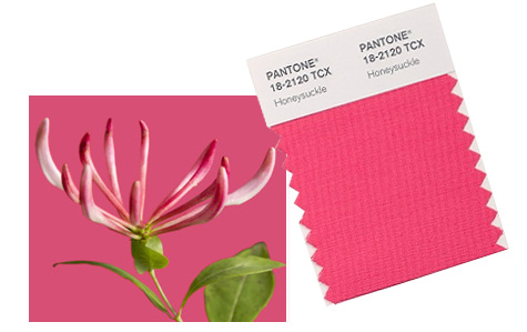 Pantone Honeysuckle Color of the Year Pink