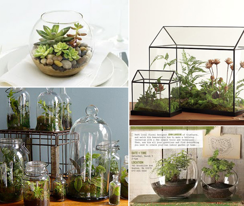 Easy Vase Terrariums Pepper Design Blog