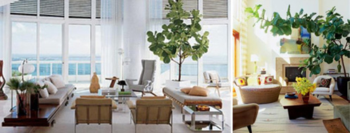 diningroom_fiddleleaffig_inspiration4_500