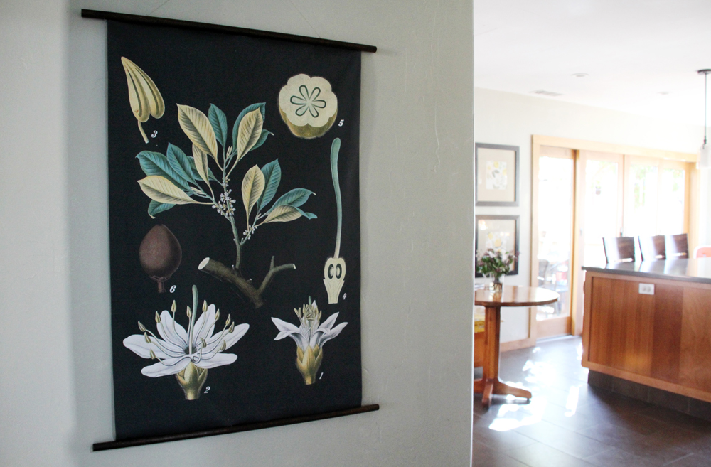 Our Den to Kitchen Transformation : Botanical Chart Art : PepperDesignBlog.com