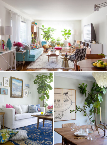 A New Fiddle Leaf Fig | PepperDesignBlog.com
