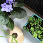 Houseplants | PepperDesignBlog.com