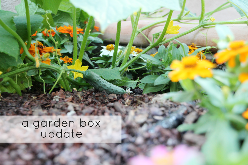 A Garden Box Harvest | PepperDesignBlog.com