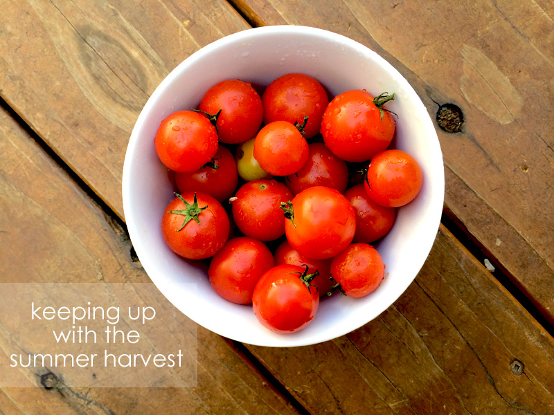 Summer Harvest Recipes | PepperDesignBlog.com