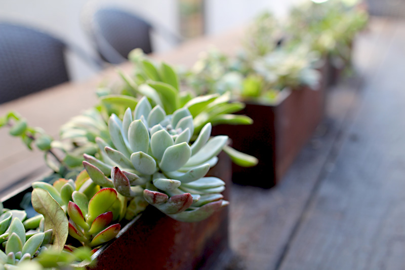 Our Side Yard | Iron Rectangular Planters | PepperDesignBlog.com