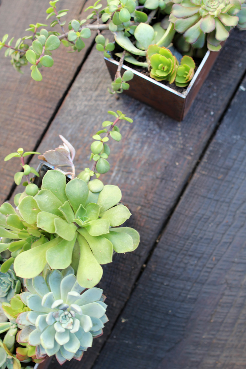 Our Side Yard | Iron Planter Boxes | PepperDesignBlog.com