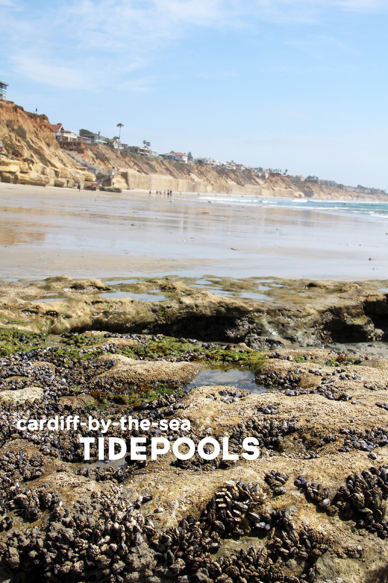 A Day at the Tidepools | PepperDesignBlog.com