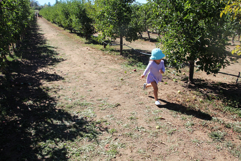 2015_julianapplepicking_trunning_1000